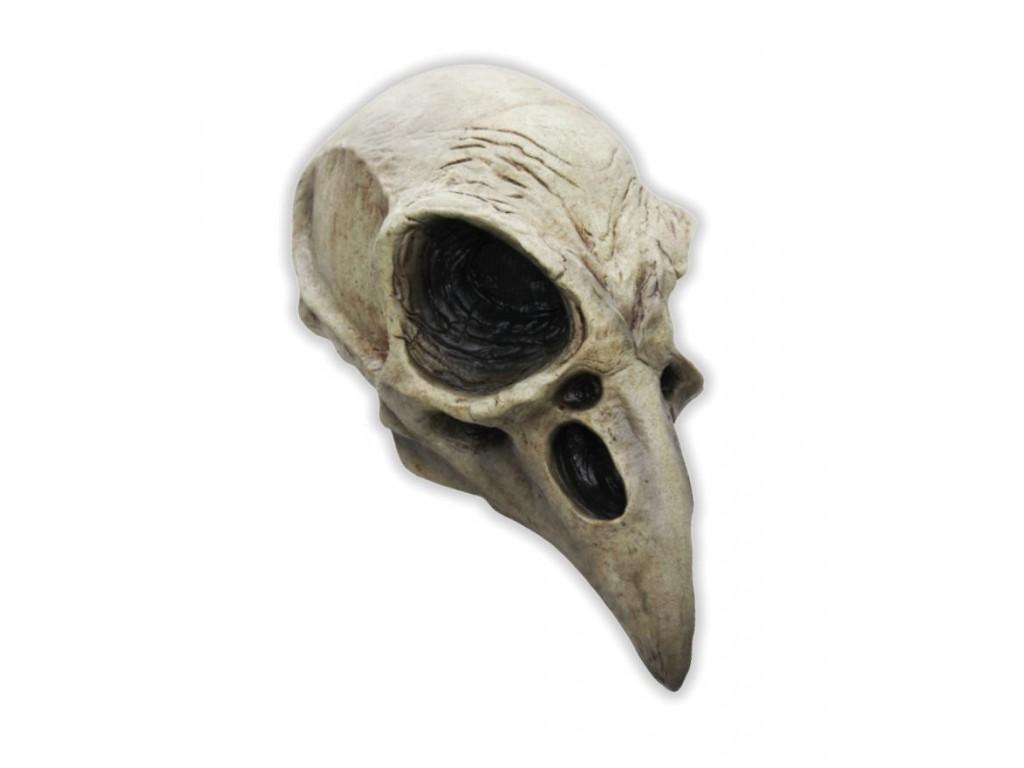 Vogel Schädel