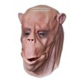 Wielbłąd Maska Zwierząt